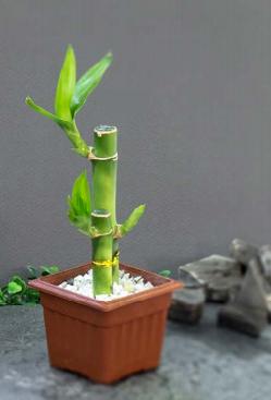 Bamboo Maceta de plástico