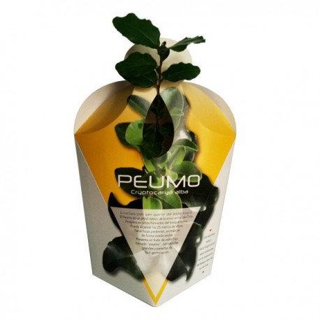 Arbol nativo envase cartulina