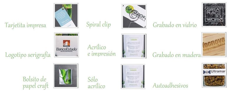 Plantas promocionales para regalos corporativos