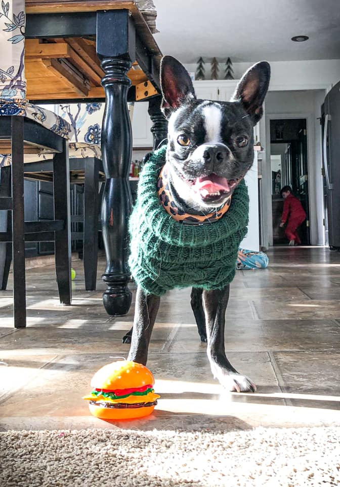 Kiki in green sweater stands with hamburger shaped dog toy.