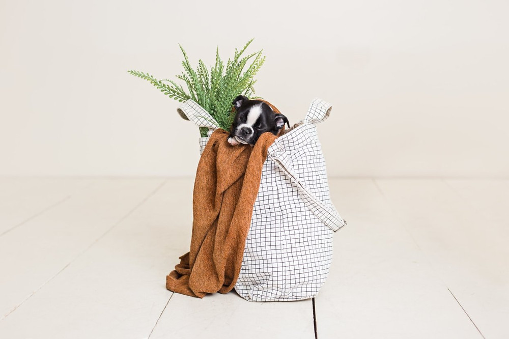 Kiki, asleep in a lined bag. A blanket and plants spill out.