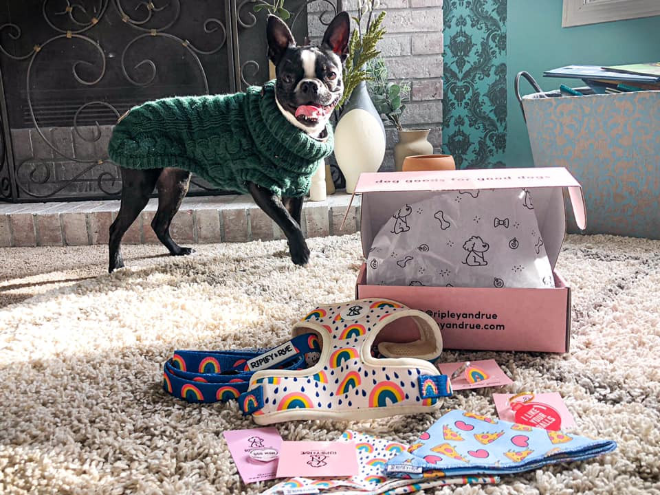 Background: Kiki stands in green sweater in front of a fireplace. In the foreground is a box that says Ripley & Rue with several dog accessories.
