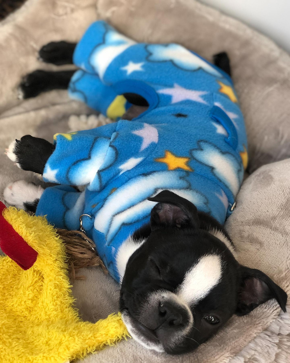 Kiki lays in a dog bed, wearing blue pajamas featuring white clouds and yellow stars. Kiki has one eye open looking at the camera.
