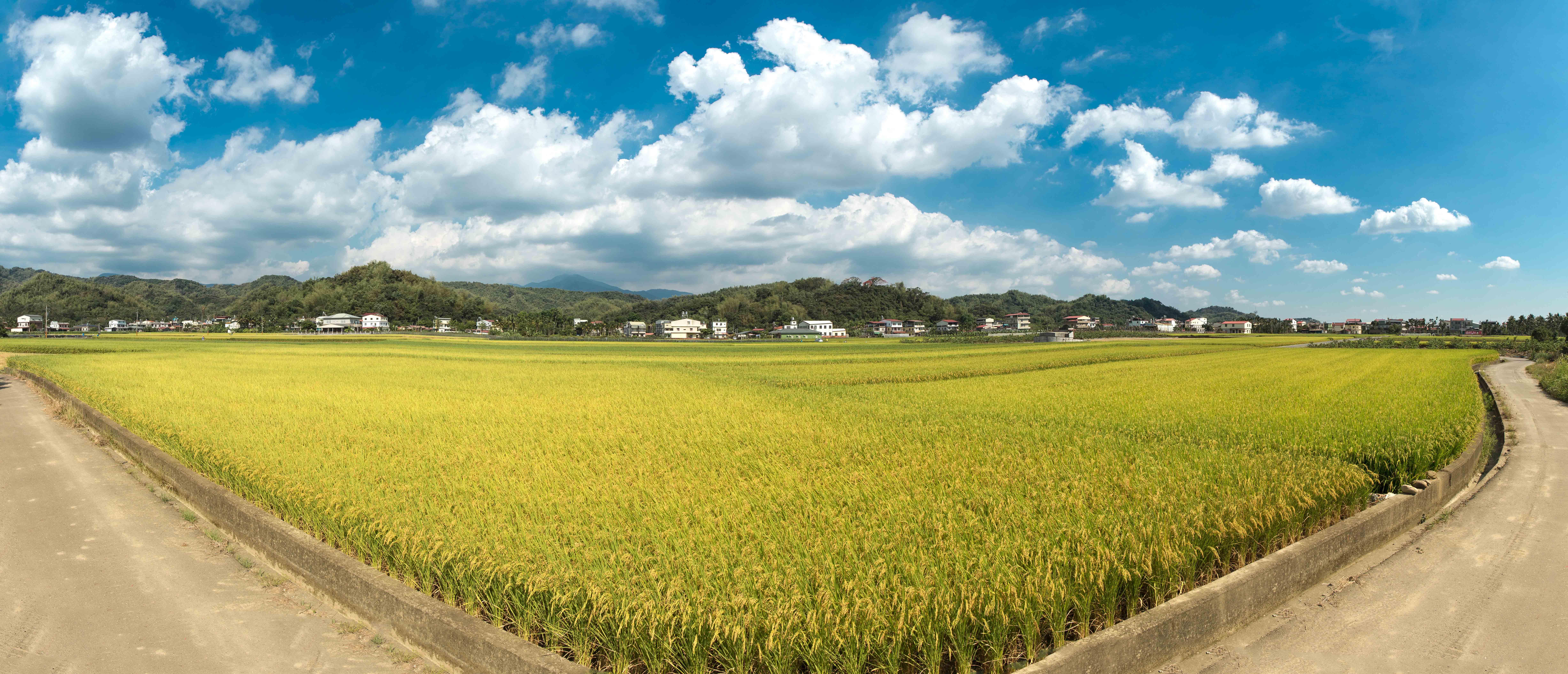 稻田-1.jpg