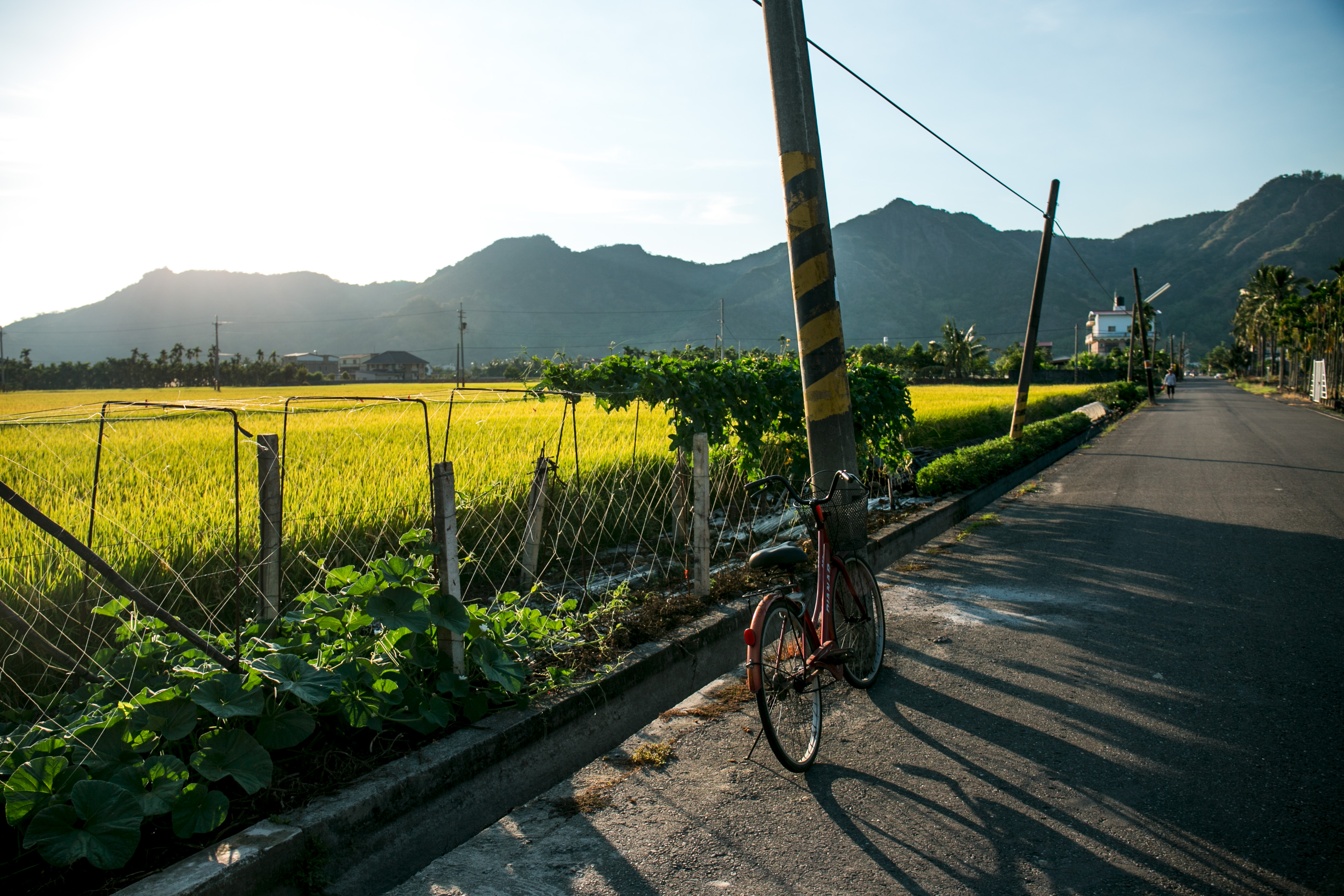 稻田-3.jpg