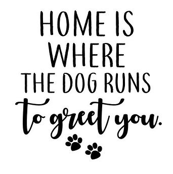 Home is where the dog.JPG