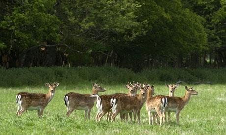 Deer Roam The Forest