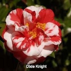 Dixie%20Knight%20Supreme_edited