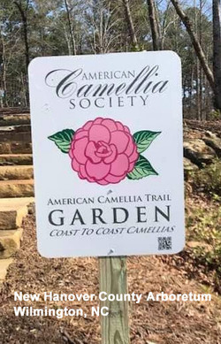 New ACS Camellia Trail Garden at NHC Arb