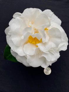Melissa Anne L 1725.jpg