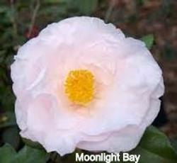 Moonlight%20Bay1_edited