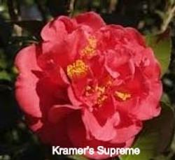 Karamer's%20supreme_edited