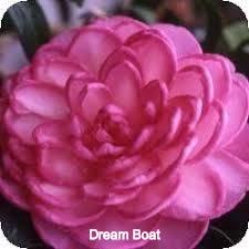 Dreamboat_edited