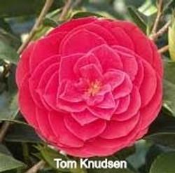 Tom%20Knudsen_edited