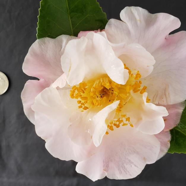High Fragrance Med 1686.jpg