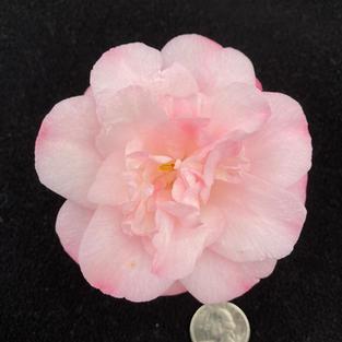 Mini Pink Mini 1459.jpg