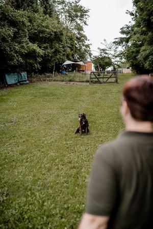 Hundeschule (2 von 15).jpg