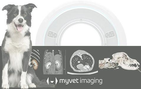 MyVet Link