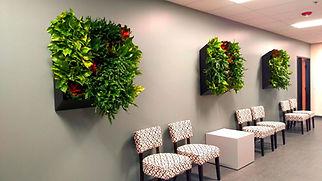 Plantology Design Living Art Installations