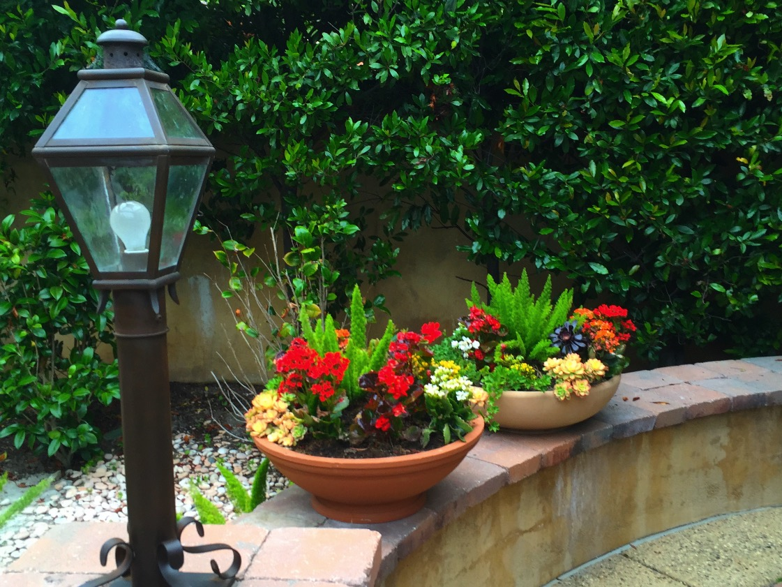Blooming Container Gardens