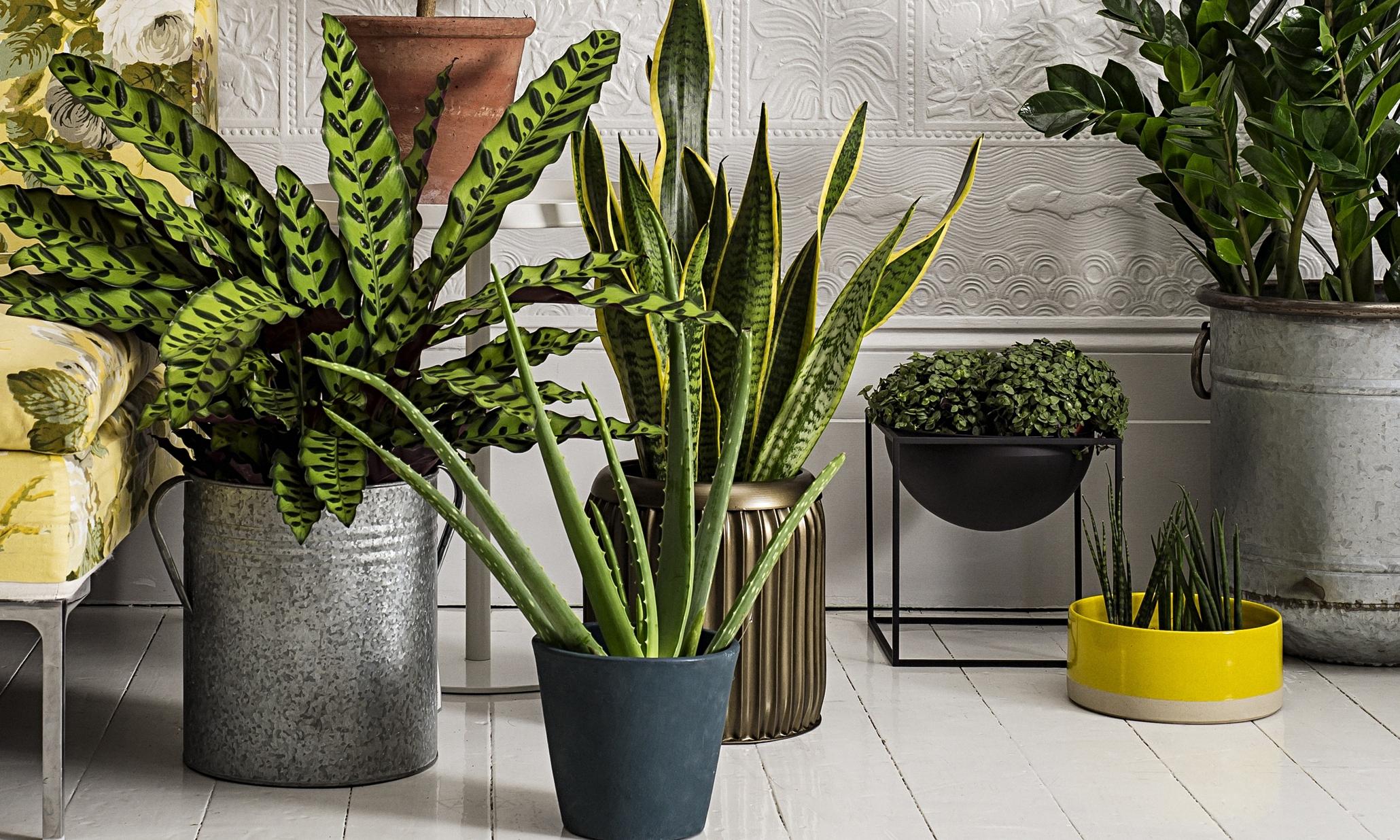 Unique Container Plants