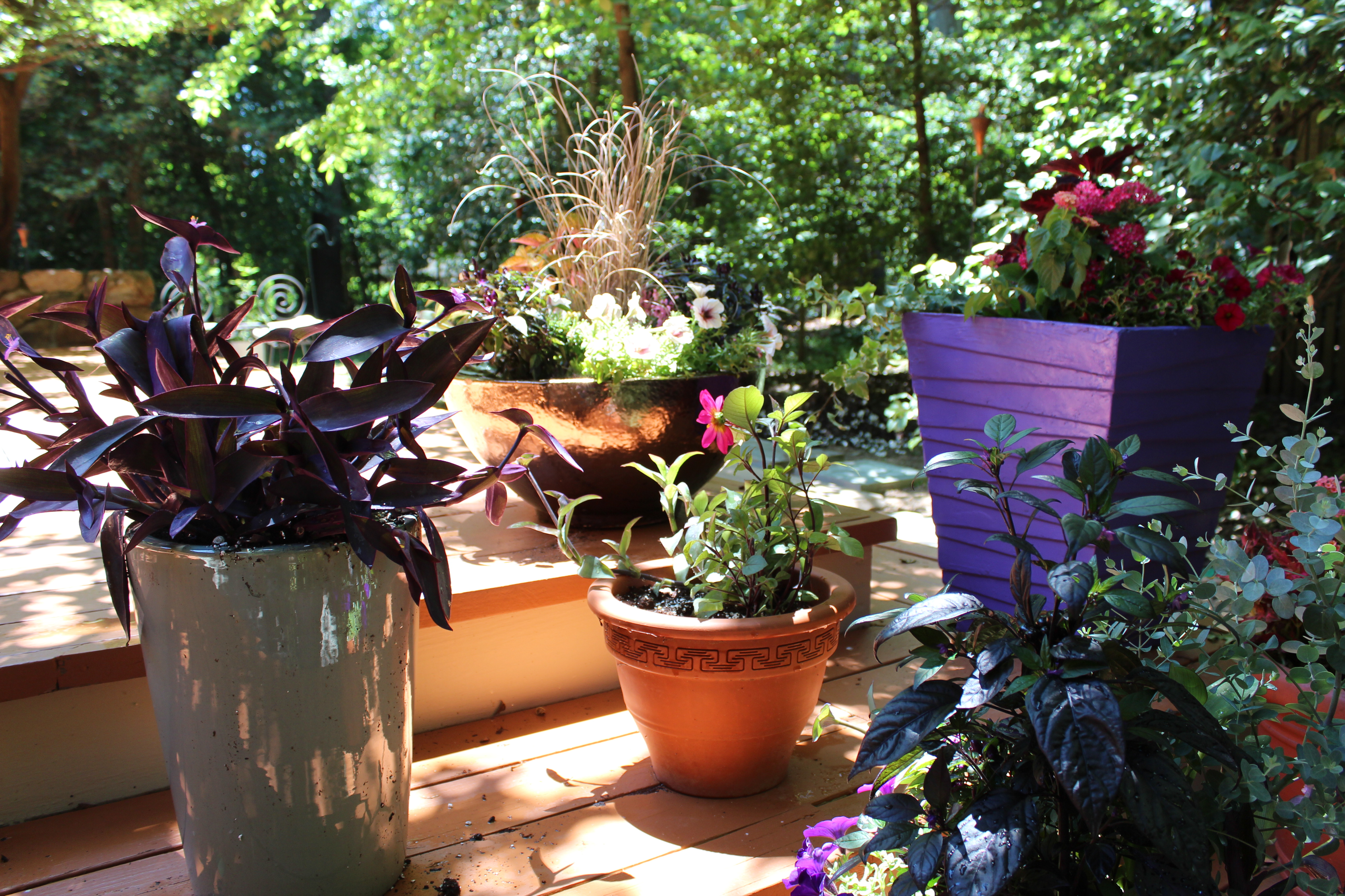 Residential Container Plants on patio