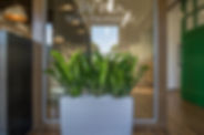 Plantology Design Commercial Plantscaping