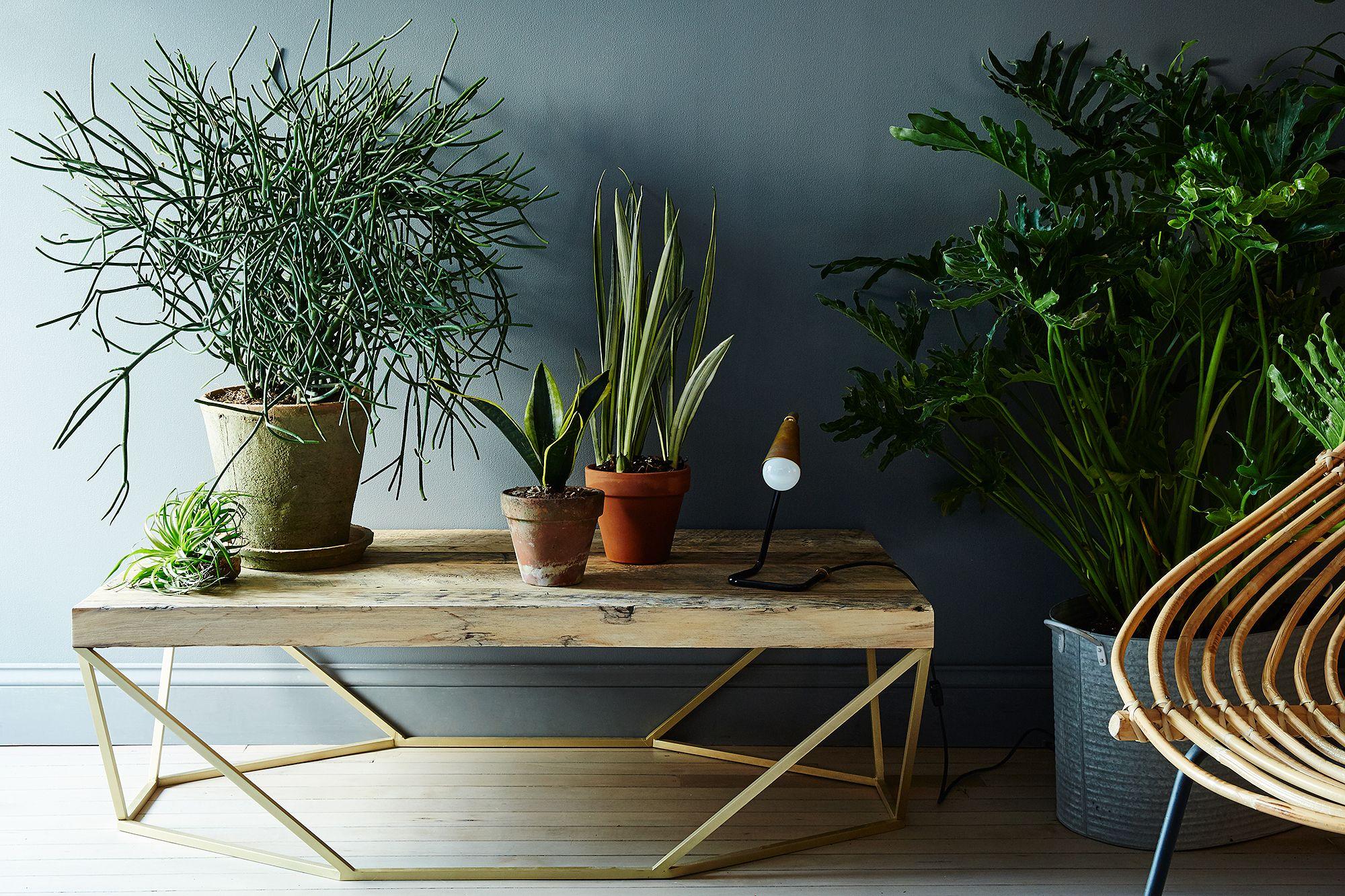 Rustic Plant Container Garden