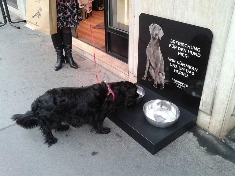 Hundetankstelle mieten