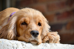 personalisierte Hundetankstelle