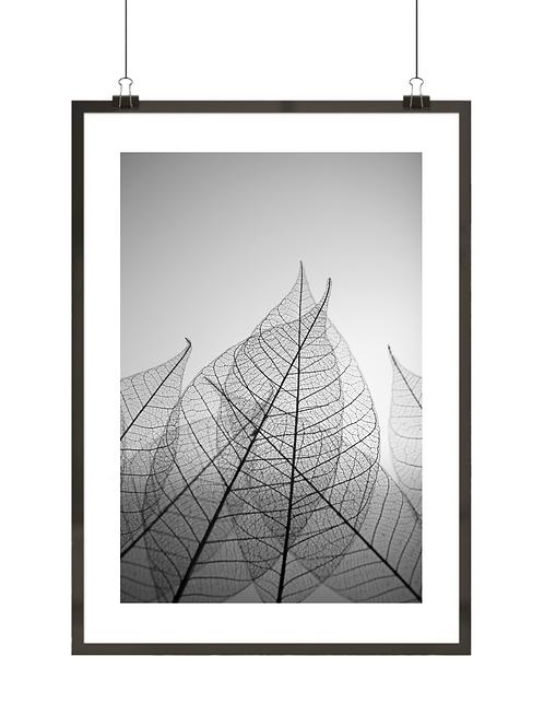 Tajemnicze liście