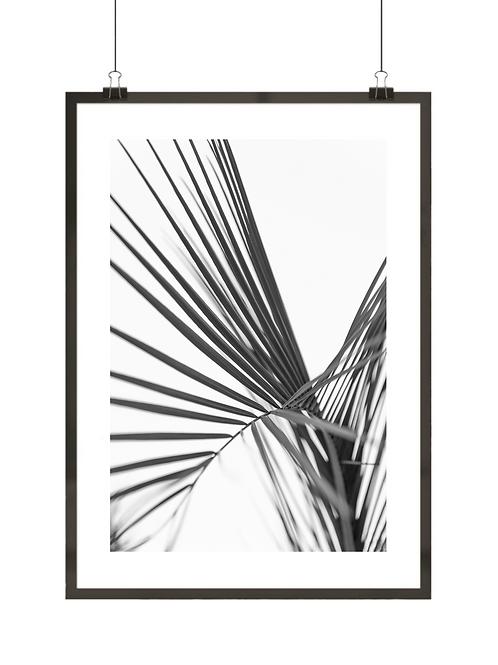 Czarno-biała palma