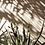 Thumbnail: Kaktus w słońcu