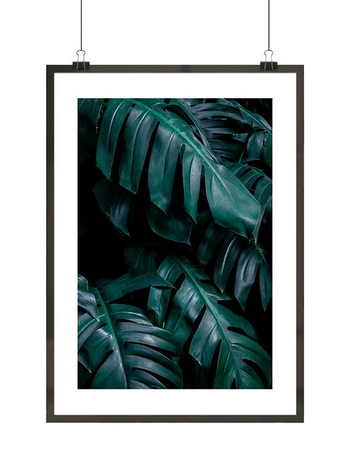 Liście tropikalne