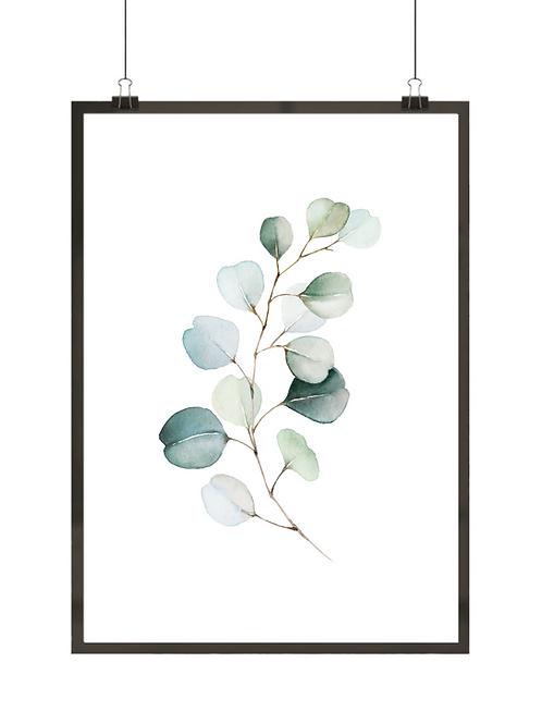 Eukaliptus i akwarela