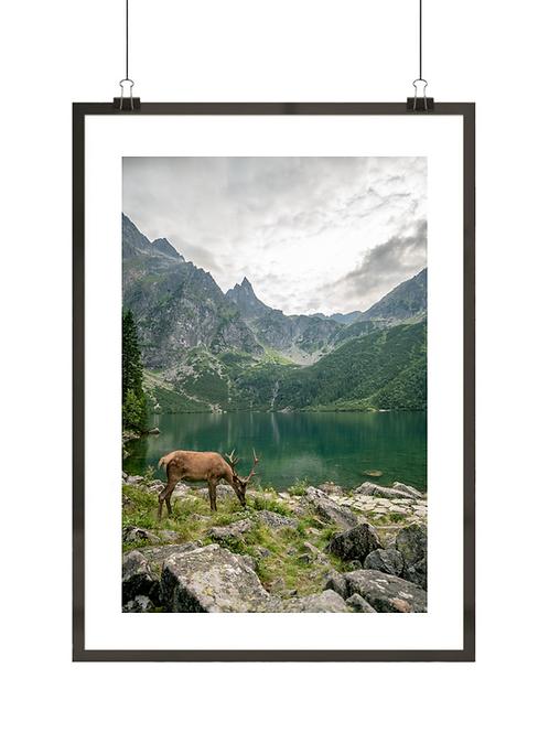 Jeleń w Tatrach