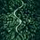 Thumbnail: Droga w lesie