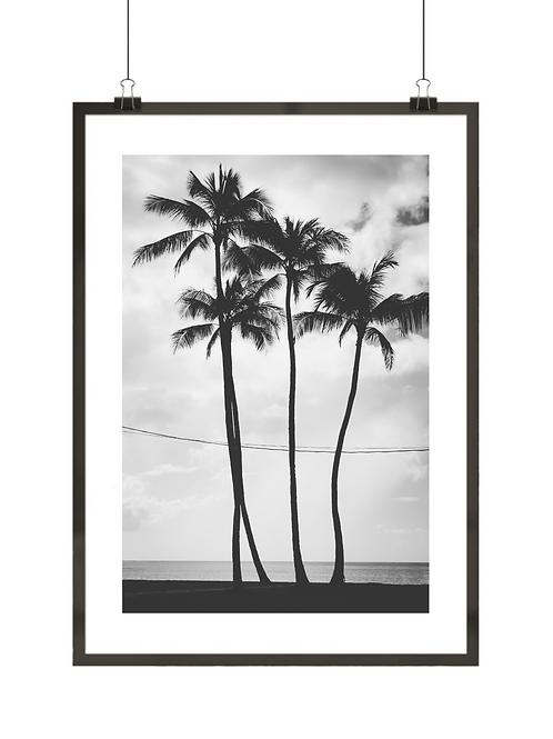 Palmy na Hawajach