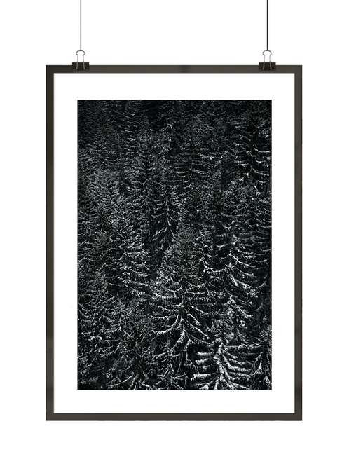 Czarno-biały las