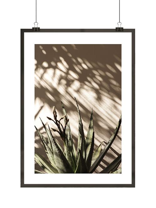 Kaktus w słońcu