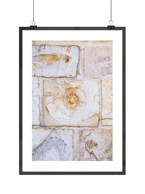 Kamień wapienny z amonitem