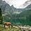 Thumbnail: Jeleń w Tatrach