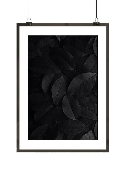 Czarne liście