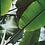 Thumbnail: Liście w słońcu