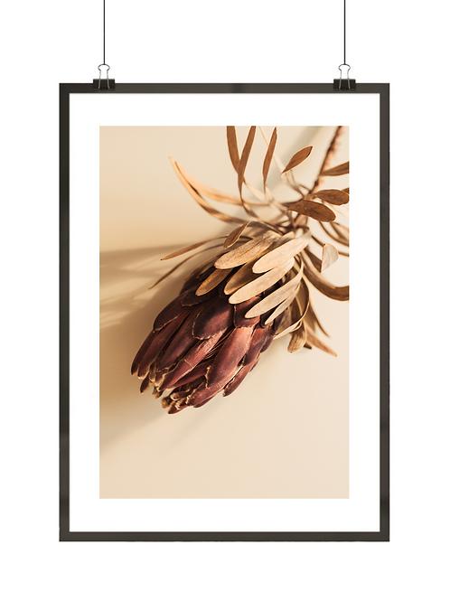 Protea królewska