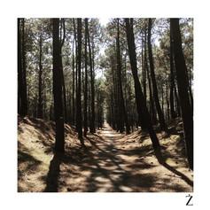 Forêt des Landes - France