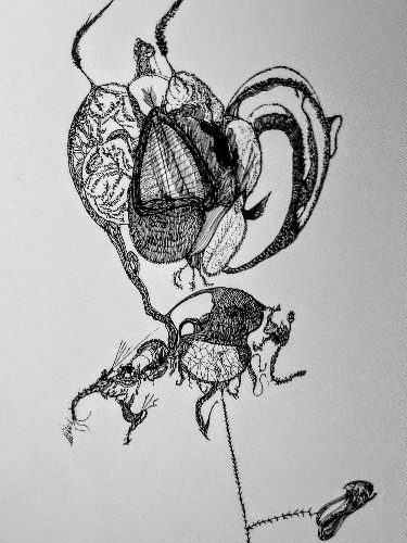 Creation of a Fruit Fly or the Surrealist Lollipop