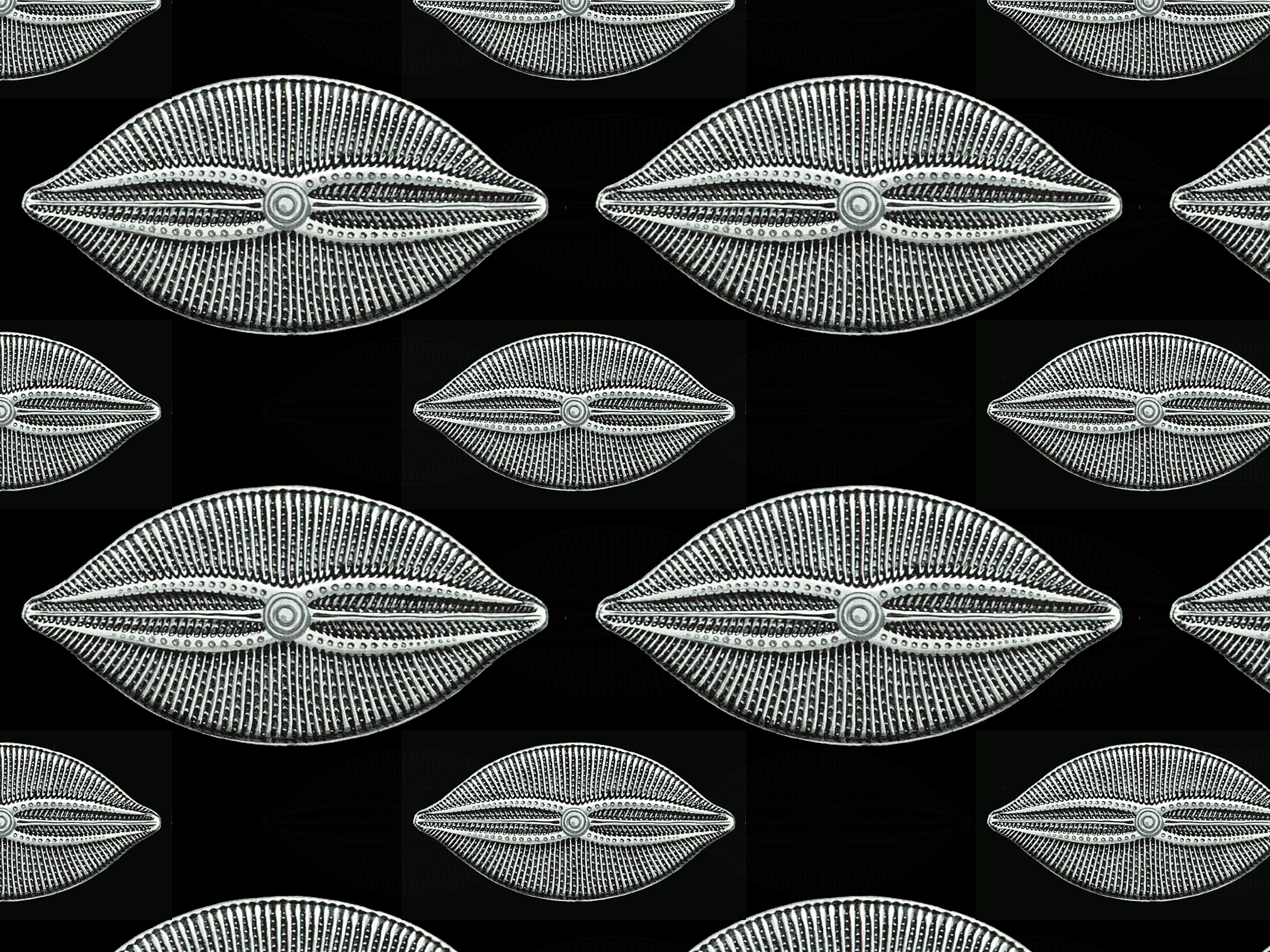 Muster Diatomea