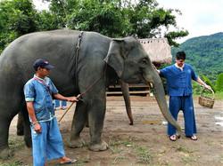 Elephant Care