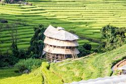 Terrace rice